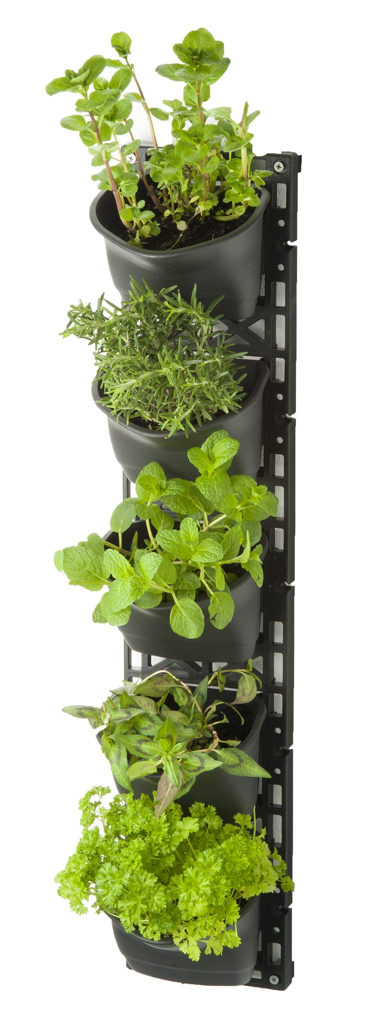 Vertical Garden Indoors Or Out